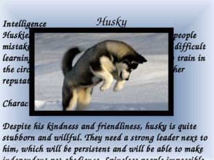 Husky Intelligence Huskies are very smart and intelligent. Often people mist