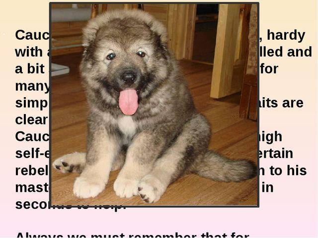 Caucasian shepherd Caucasian shepherd dog is a strong, hardy with a balanced...