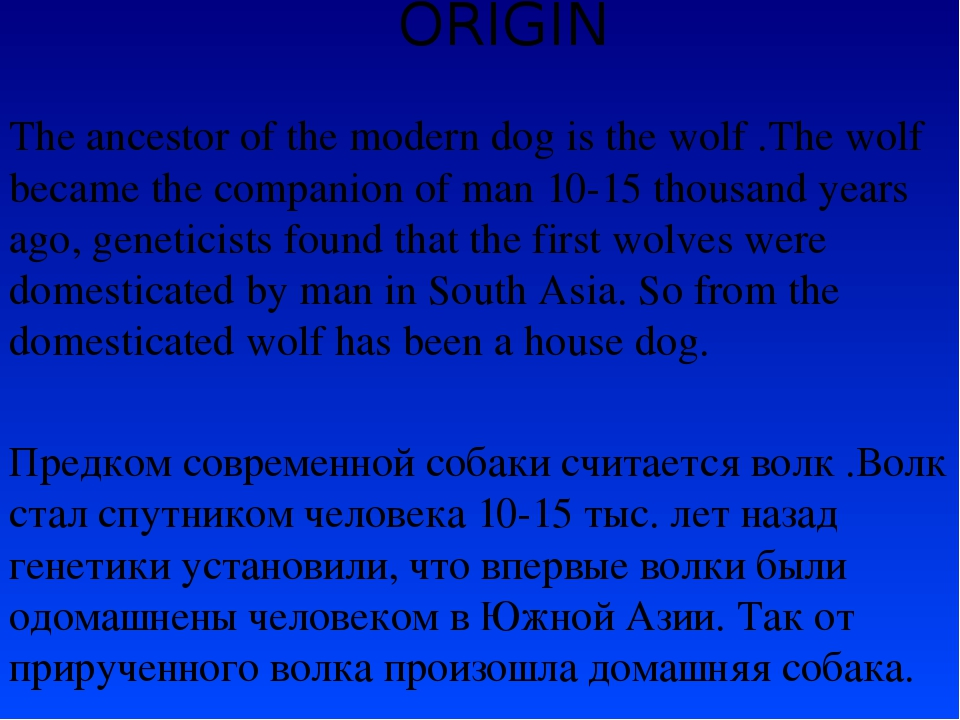 ORIGIN The ancestor of the modern dog is the wolf .The wolf became the compan...