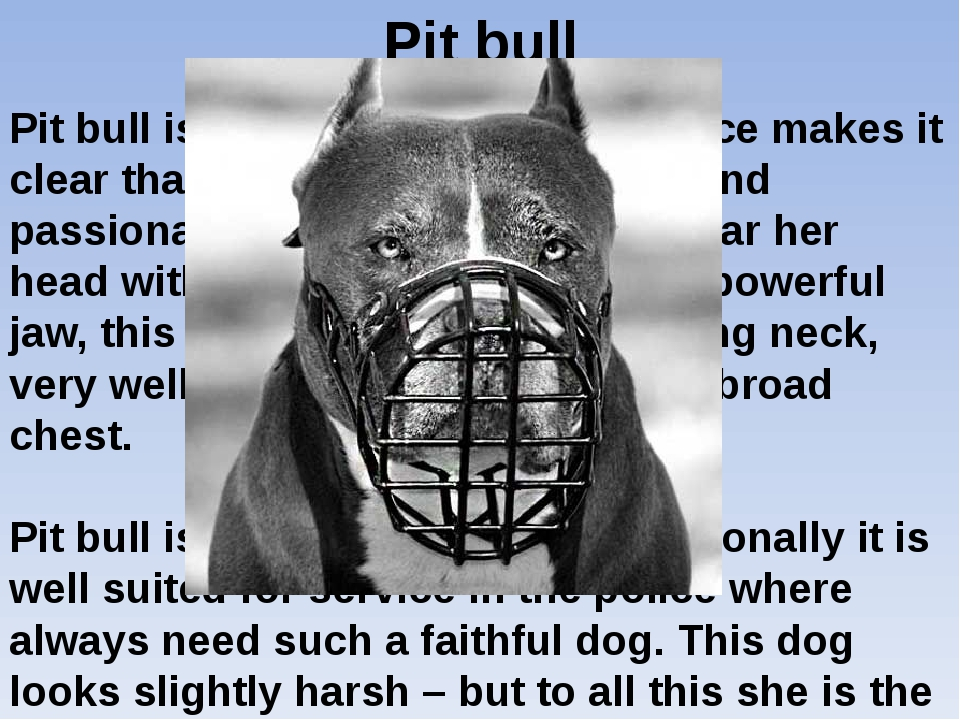 Pit bull Pit bull is a dog, which at first glance makes it clear that this do...