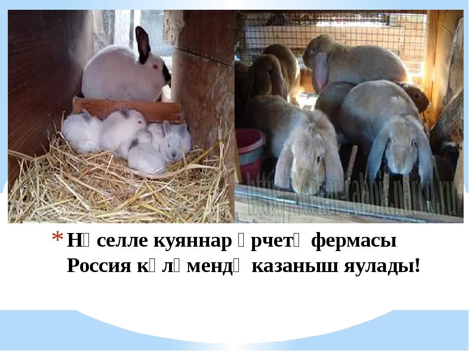 Нәселле куяннар үрчетү фермасы Россия күләмендә казаныш яулады!