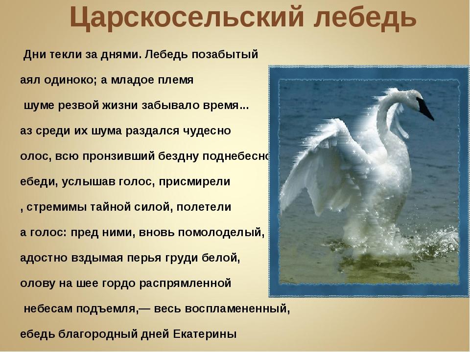 Царскосельский лебедь … Дни текли за днями. Лебедь позабытый Таял одиноко; а...