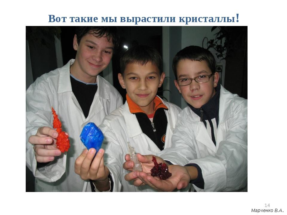 Вот такие мы вырастили кристаллы! * Марченко В.А.