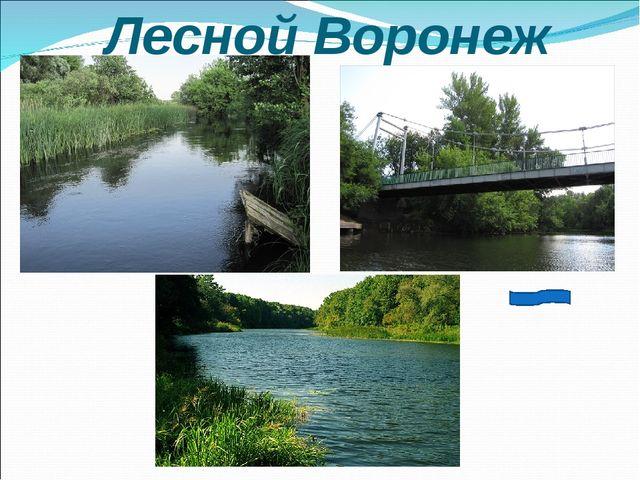 Лесной Воронеж