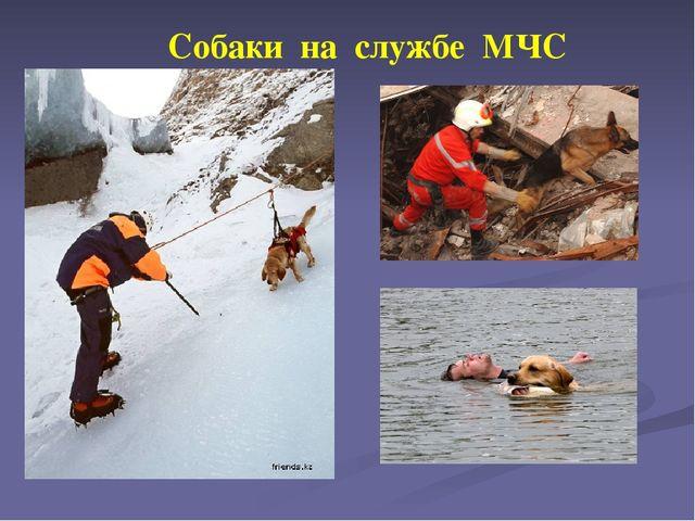 Собаки на службе МЧС