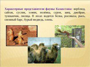 Характерные представители фауны Казахстана: верблюд, сайгак, суслик, хомяк,