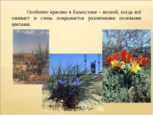Особенно красиво в Казахстане – весной, когда всё оживает и степь покрываетс