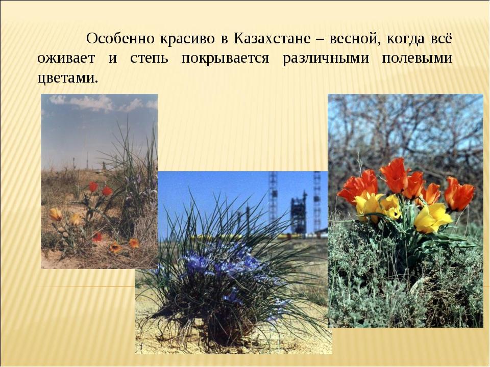 Особенно красиво в Казахстане – весной, когда всё оживает и степь покрываетс...