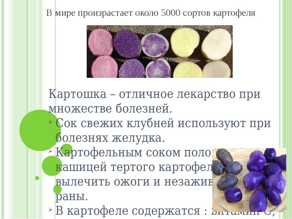 В мире произрастает около 5000 сортов картофеля Картошка – отличное лекарство...