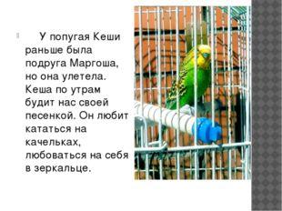 У попугая Кеши раньше была подруга Маргоша, но она улетела. Кеша по утрам бу