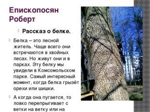 Епископосян Роберт Рассказ о белке. Белка – это лесной житель. Чаще всего они