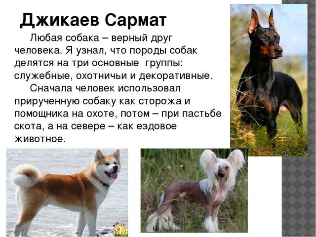 Джикаев Сармат Любая собака – верный друг человека. Я узнал, что породы соба...