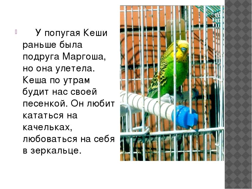 У попугая Кеши раньше была подруга Маргоша, но она улетела. Кеша по утрам бу...