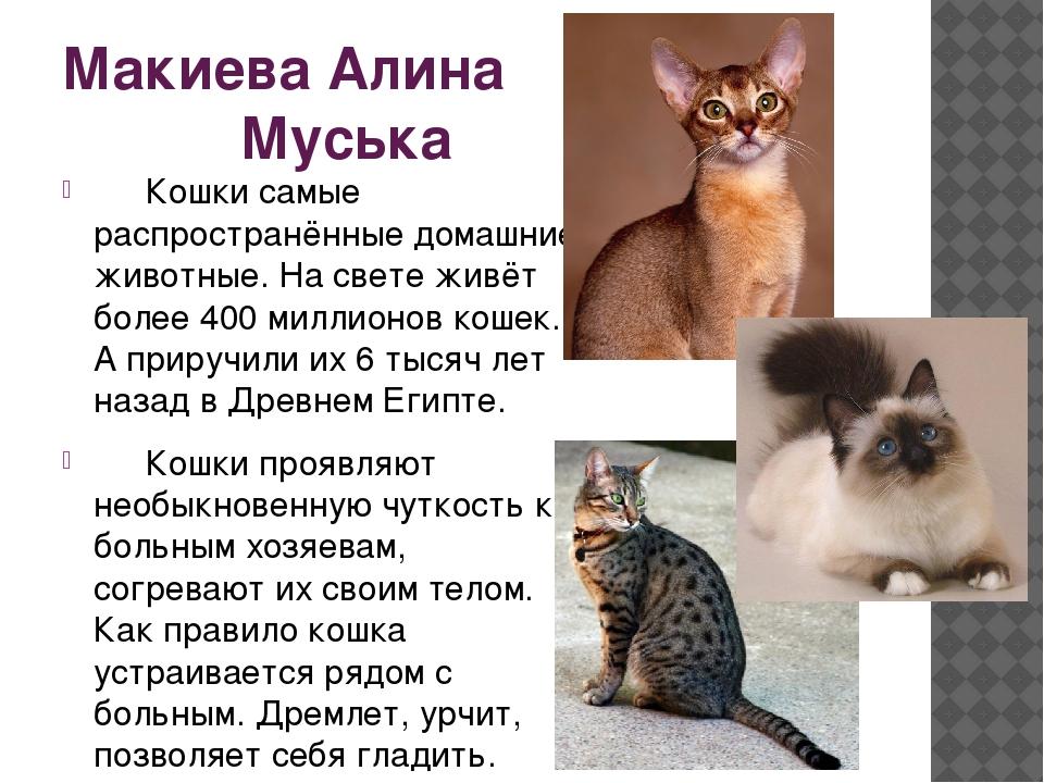 Макиева Алина Муська Кошки самые распространённые домашние животные. На свет...