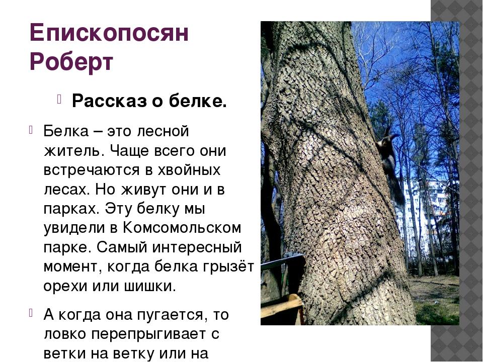 Епископосян Роберт Рассказ о белке. Белка – это лесной житель. Чаще всего они...