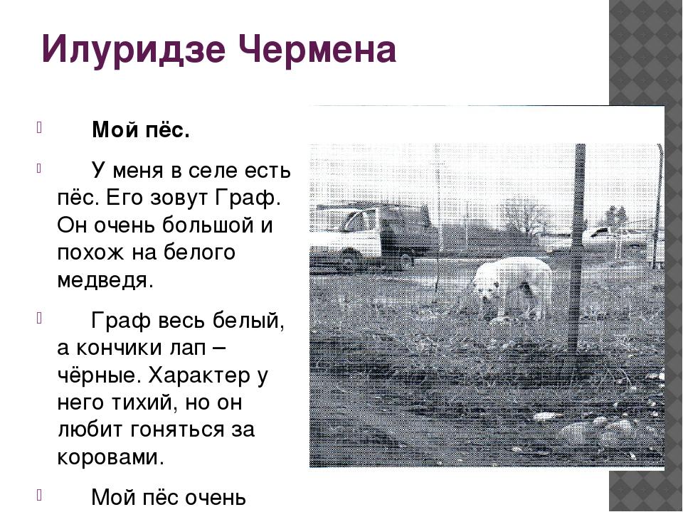 Илуридзе Чермена Мой пёс. У меня в селе есть пёс. Его зовут Граф. Он очень...