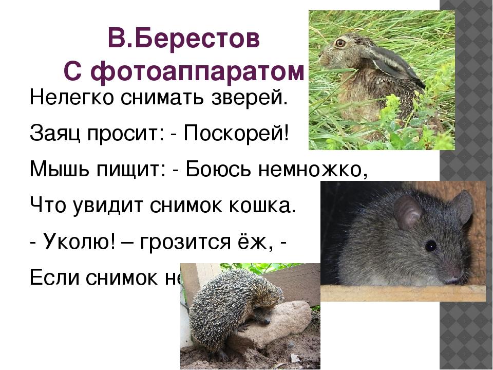 В.Берестов С фотоаппаратом Нелегко снимать зверей. Заяц просит: - Поскорей! М...