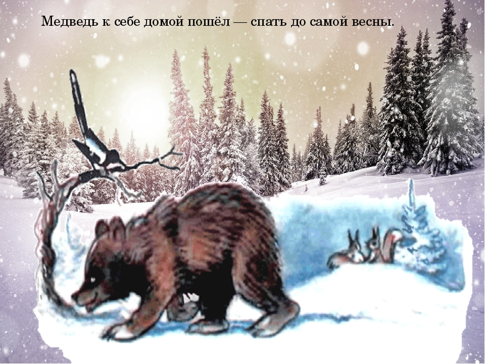 Медведь к себе домой пошёл — спать до самой весны.