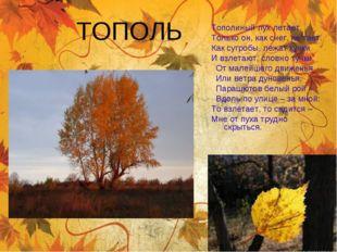 ТОПОЛЬ Тополиный пухлетает, Только он, как снег, не тает. Как сугробы, лежат