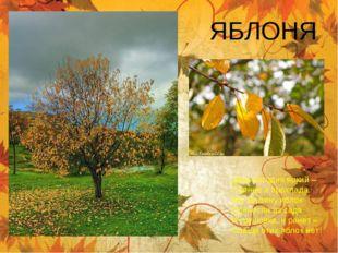 ЯБЛОНЯ День сегодня яркий – Солнце и прохлада. Мы корзину яблок Принесли из с