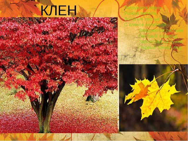КЛЕН Закружила осень Рыжие метели, Золотые листья С кленов полетели Закружилс...