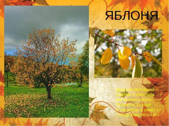 ЯБЛОНЯ День сегодня яркий – Солнце и прохлада. Мы корзину яблок Принесли из с...