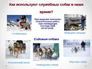 Как используют служебных собак в наше время? При ведении поисково-спасательны