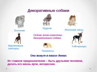 Декоративные собаки Сейчас всем известны декоративные собаки. Они живут в наш