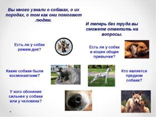 Вы много узнали о собаках, о их породах, о том как они помогают людям. И тепе