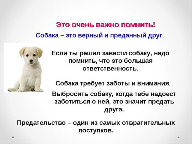 Это очень важно помнить! Собака – это верный и преданный друг. Если ты решил...
