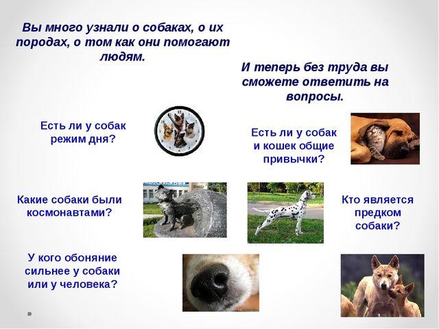 Вы много узнали о собаках, о их породах, о том как они помогают людям. И тепе...