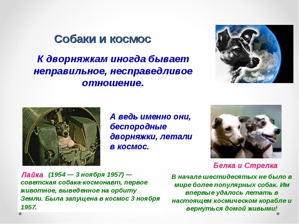 Собаки и космос К дворняжкам иногда бывает неправильное, несправедливое отнош...