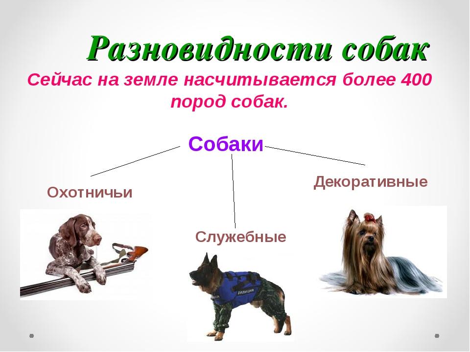 Разновидности собак Сейчас на земле насчитывается более 400 пород собак. Охот...