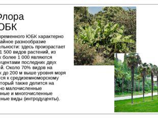 Флора ЮБК Для современного ЮБК характерно необычайное разнообразие растительн