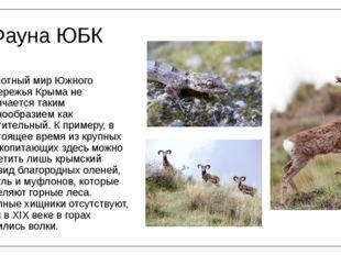 Фауна ЮБК Животный мир Южного побережья Крыма не отличается таким разнообрази