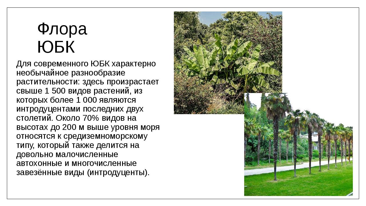 Флора ЮБК Для современного ЮБК характерно необычайное разнообразие растительн...