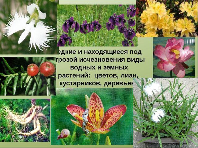 Редкие и находящиеся под угрозой исчезновения виды водных и земных растений:...