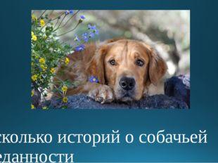 несколько историй о собачьей преданности
