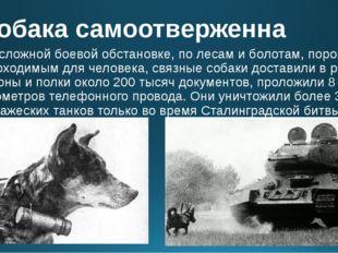 Собака самоотверженна В сложной боевой обстановке, по лесам и болотам, порой