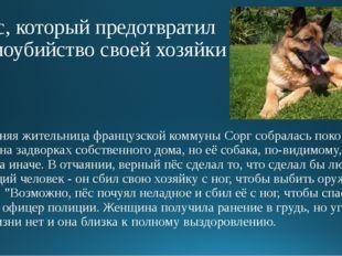 Пёс, который предотвратил самоубийство своей хозяйки 63-летняя жительница фра
