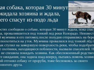 Верная собака, которая 30 минут не покидала хозяина и ждала, пока его спасут