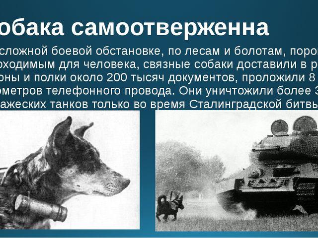 Собака самоотверженна В сложной боевой обстановке, по лесам и болотам, порой...