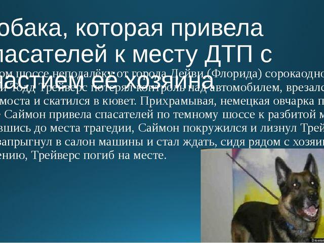 Собака, которая привела спасателей к месту ДТП с участием её хозяина На 84-ом...