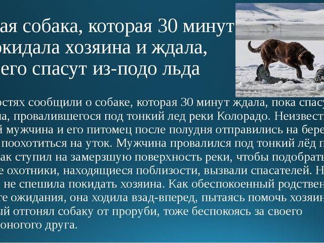 Верная собака, которая 30 минут не покидала хозяина и ждала, пока его спасут...