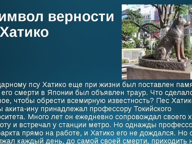 Символ верности – Хатико Легендарному псу Хатико еще при жизни был поставлен...