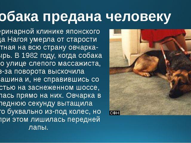 Собака предана человеку В ветеринарной клинике японского города Нагоя умерла...