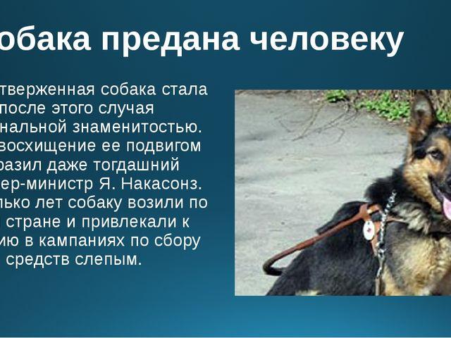 Собака предана человеку Самоотверженная собака стала после этого случая нацио...