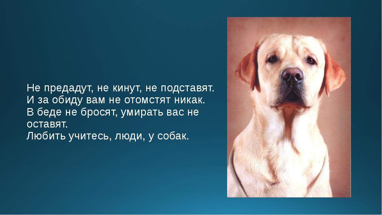 статусы и картинки про собак изюминкой является