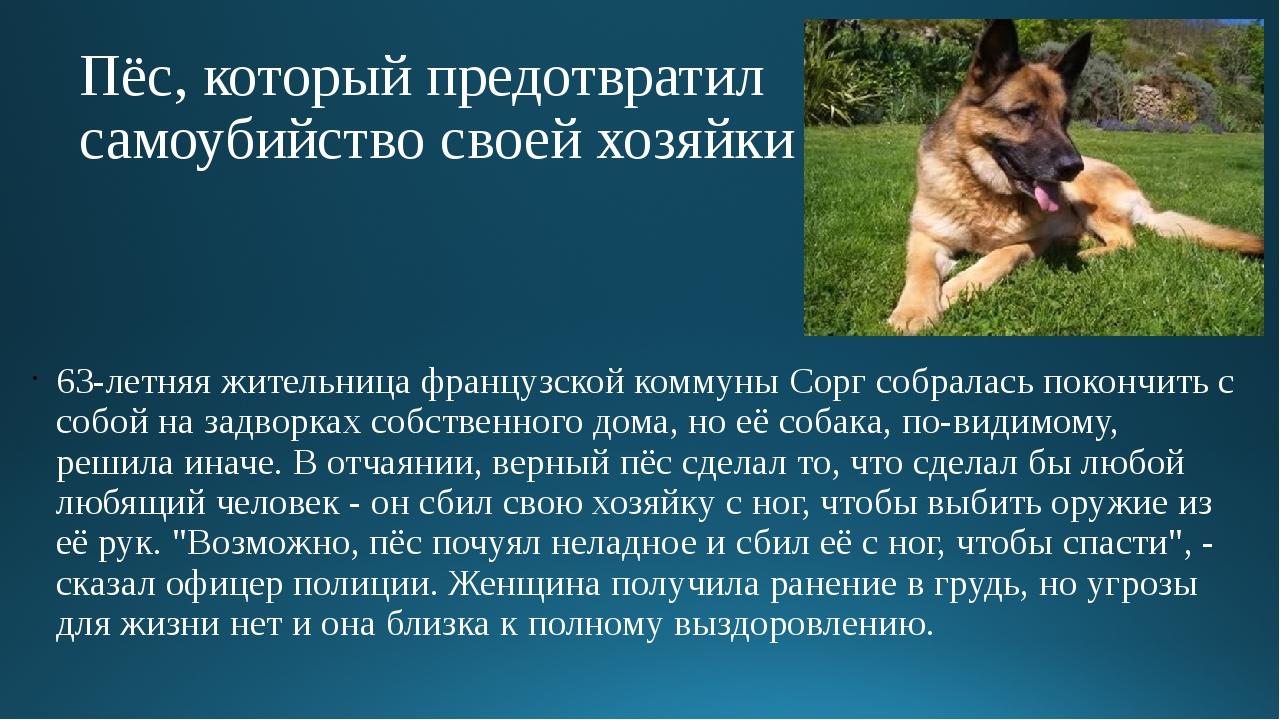 Пёс, который предотвратил самоубийство своей хозяйки 63-летняя жительница фра...