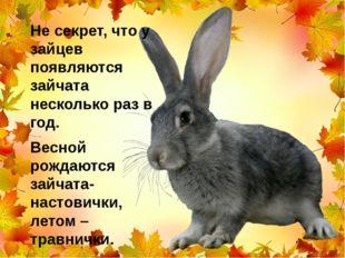 Не секрет, что у зайцев появляются зайчата несколько раз в год. Весной рождаю